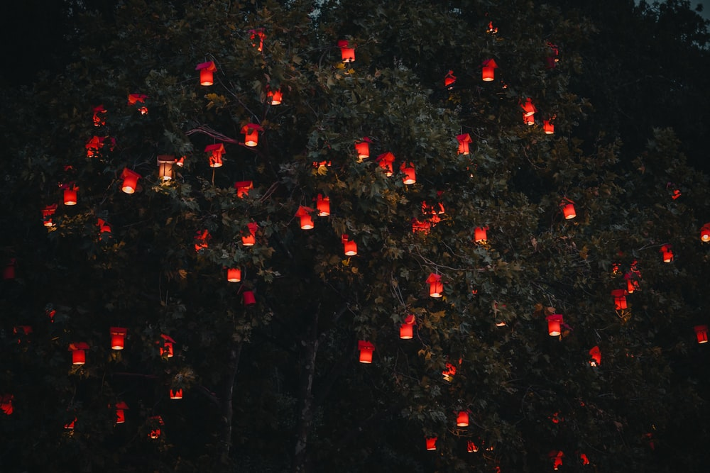 red lanterns on tree
