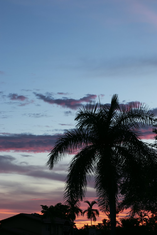 silhouette photo of palm tree