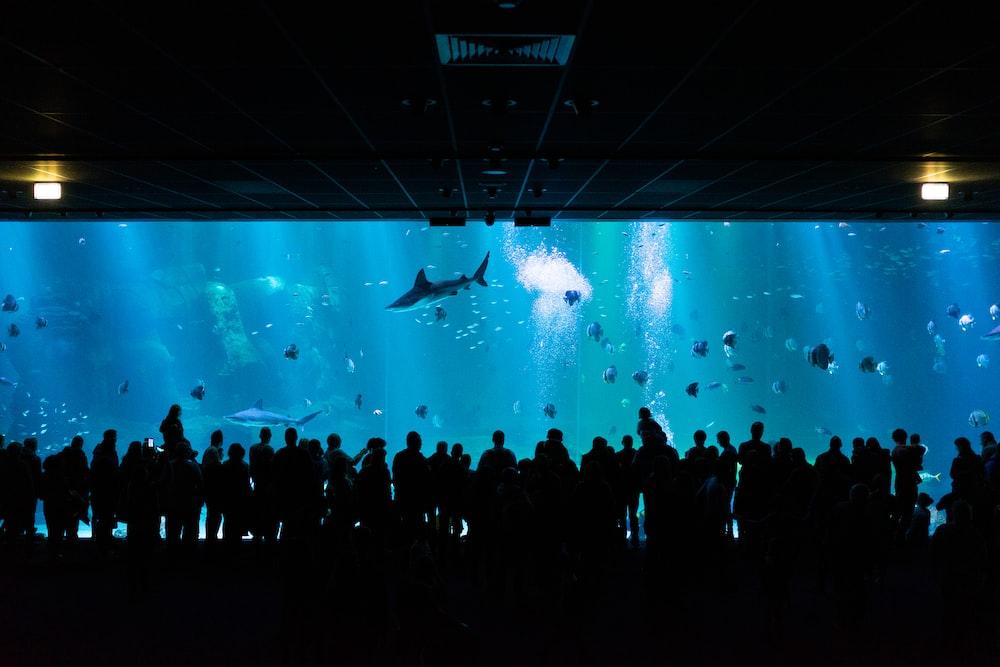 silhouette photography of people watching underground aquarium