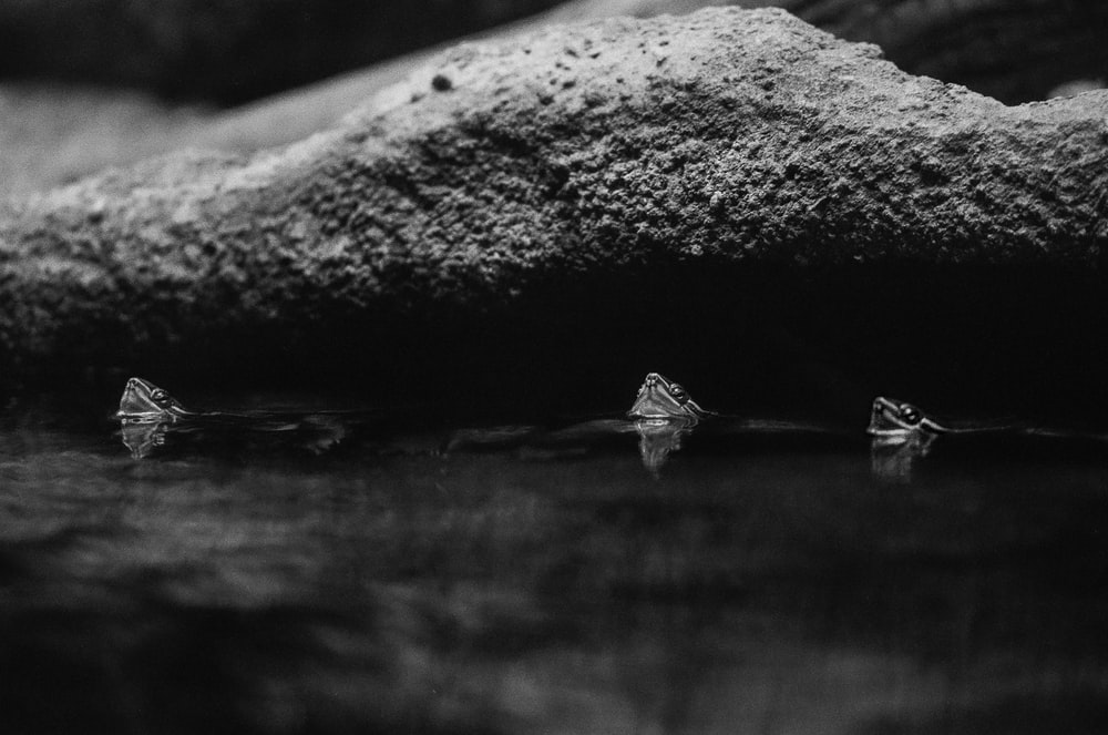 grayscale photo of insects float on water