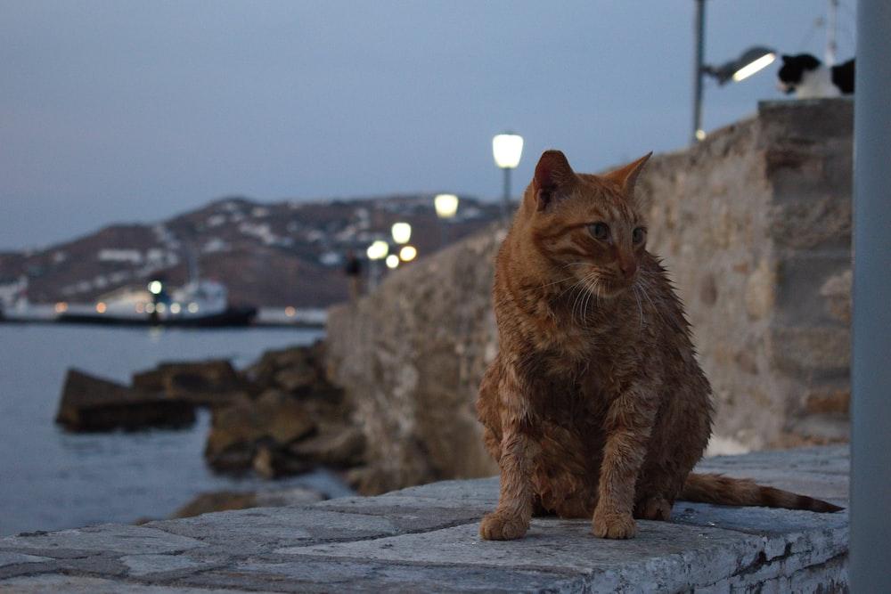 orange tabby cat sitting on bay