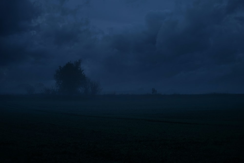landscape photography of a tree under a dramatic sky during nighttime