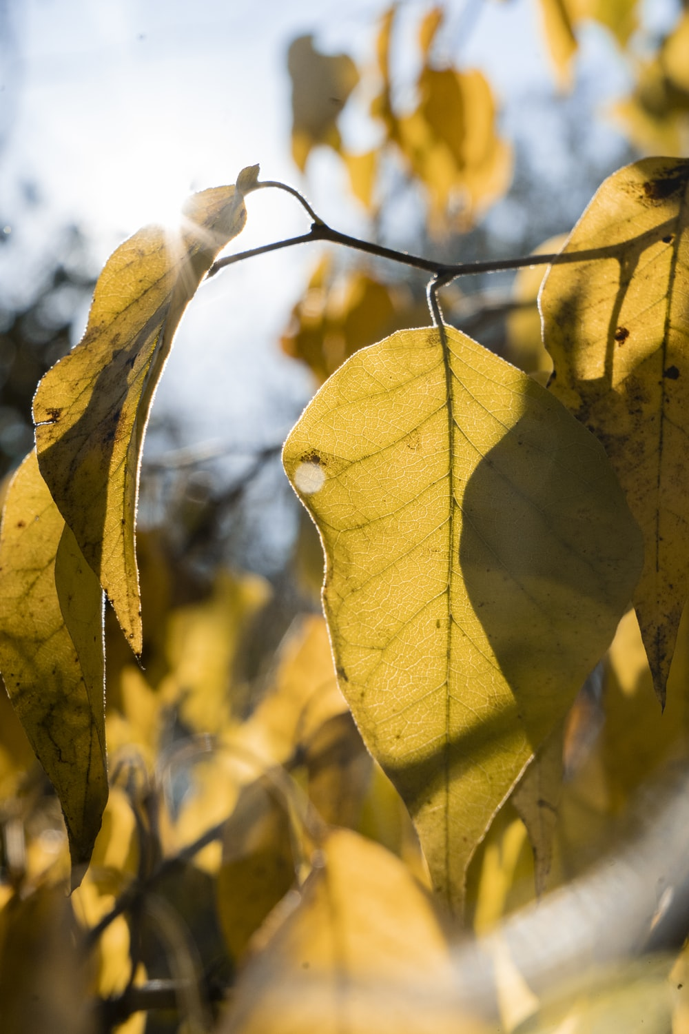 closeup photography of yellow leaf
