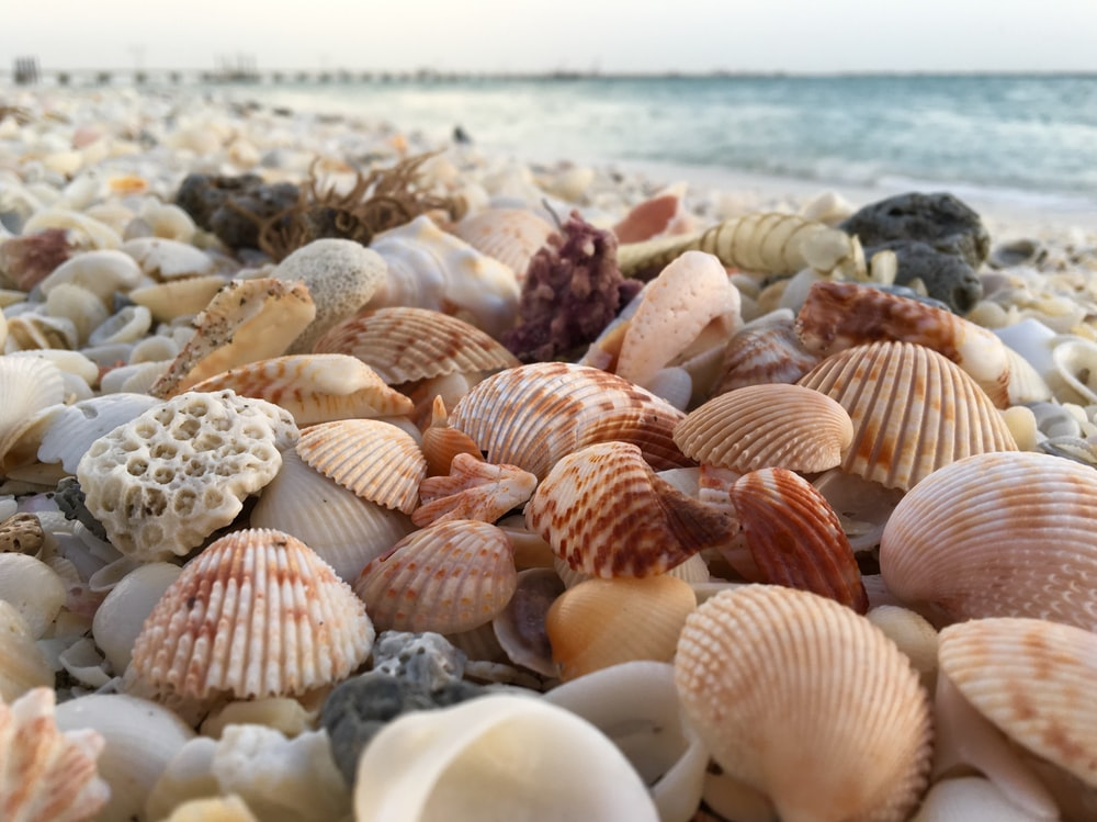 brown and beige shells during daytime