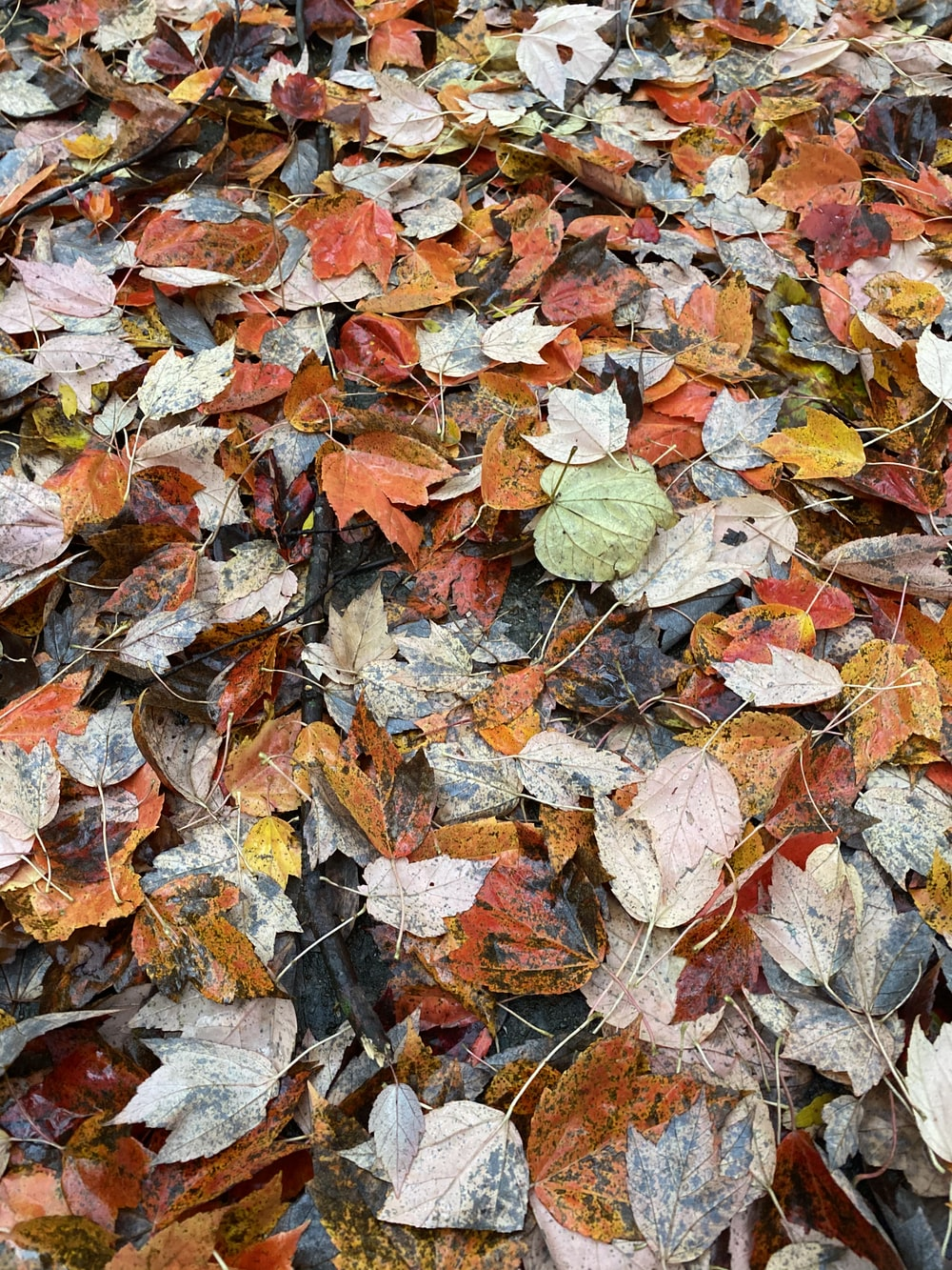 brown and white leaves