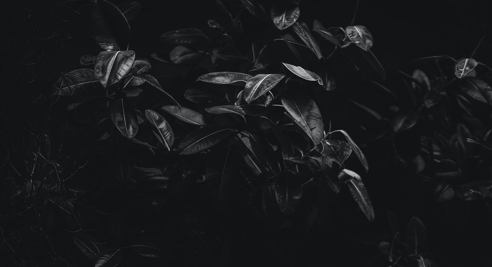 black and white photo of plants