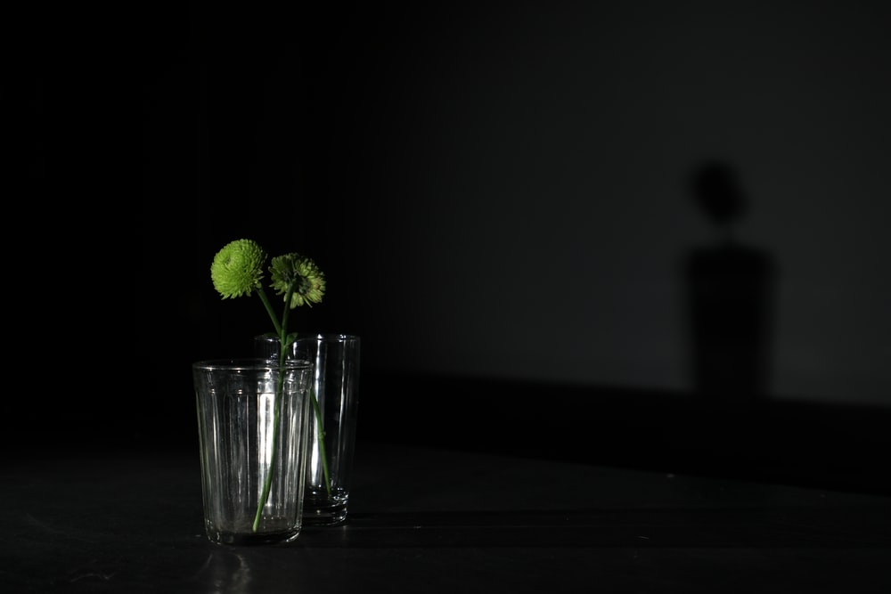 green leafed plant in drinking glass