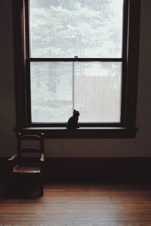 kitten on window
