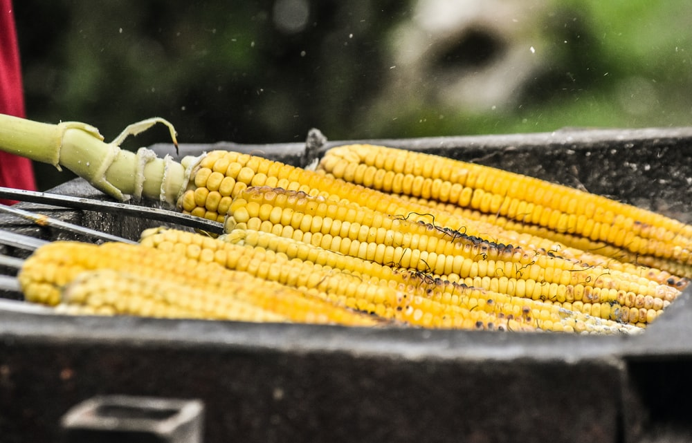 shallow focus photo of yellow corns