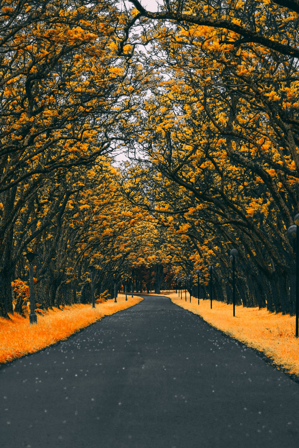 paved road between trees