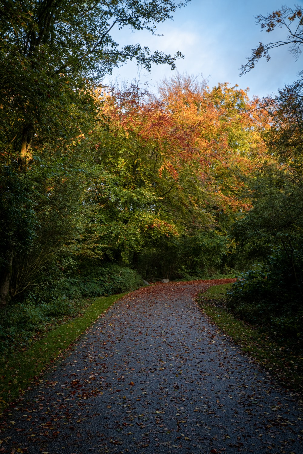 pathway filled with leaves