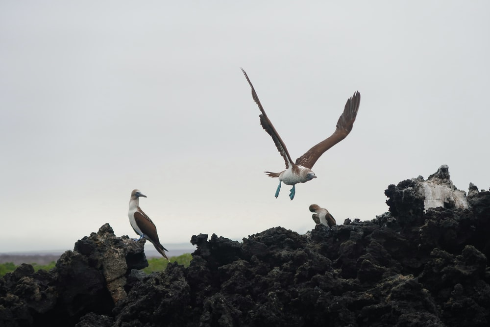 three white and brown birds