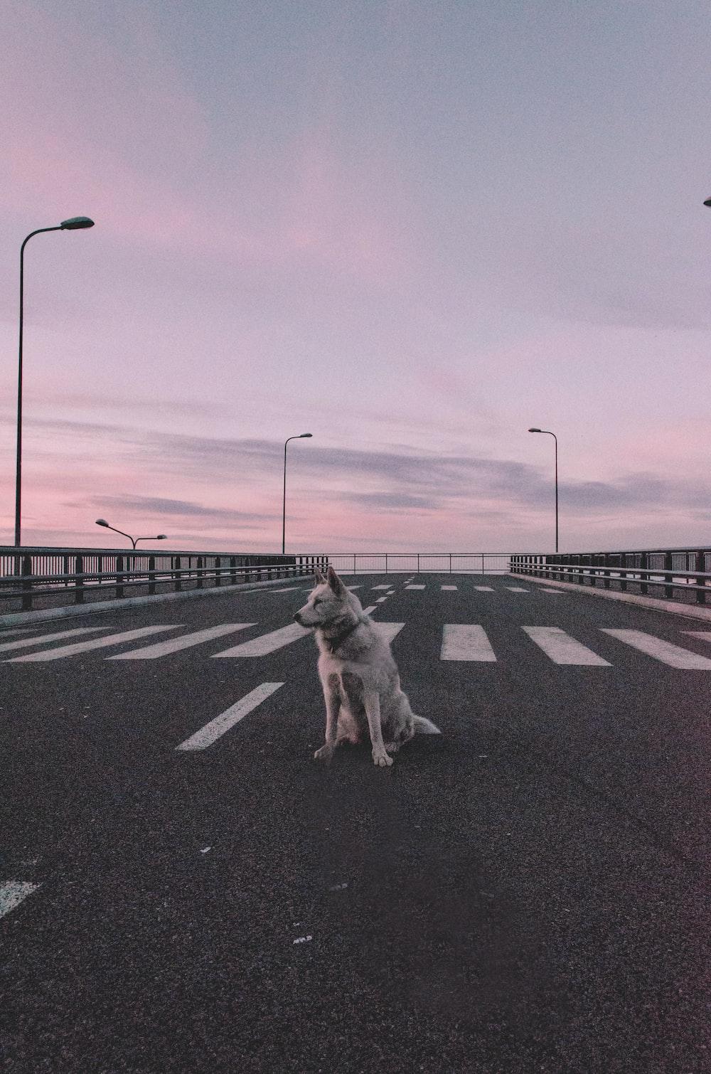 white dog sitting on road during daytime