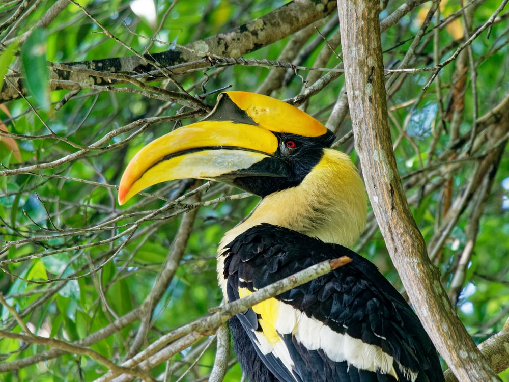black and yellow toucan bird on a tree