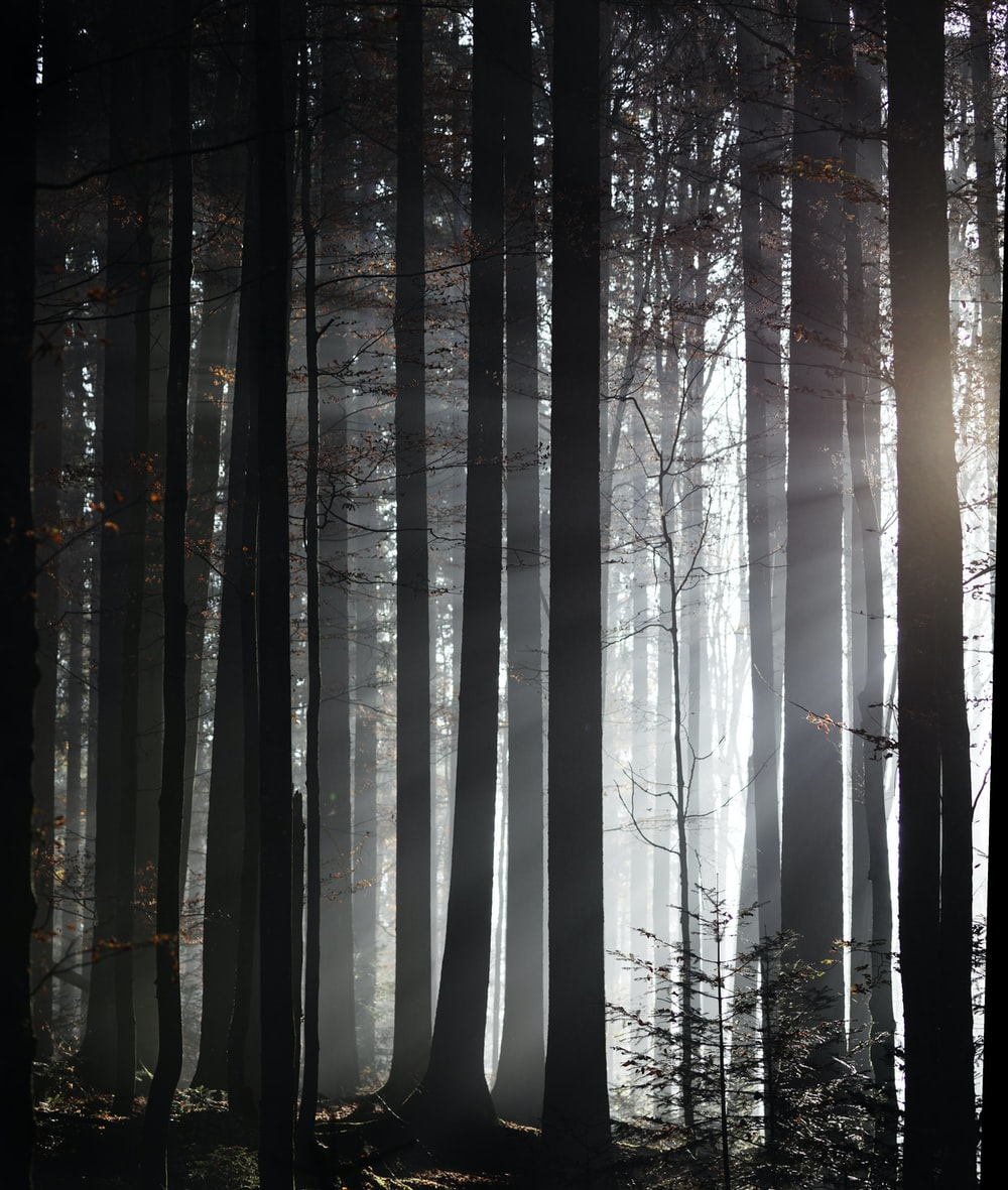 silhouette photography of forest trees