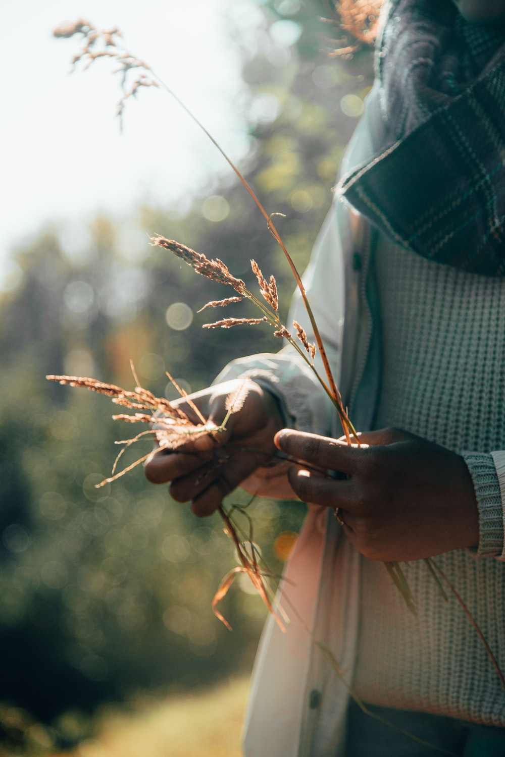 person holding brown flowers