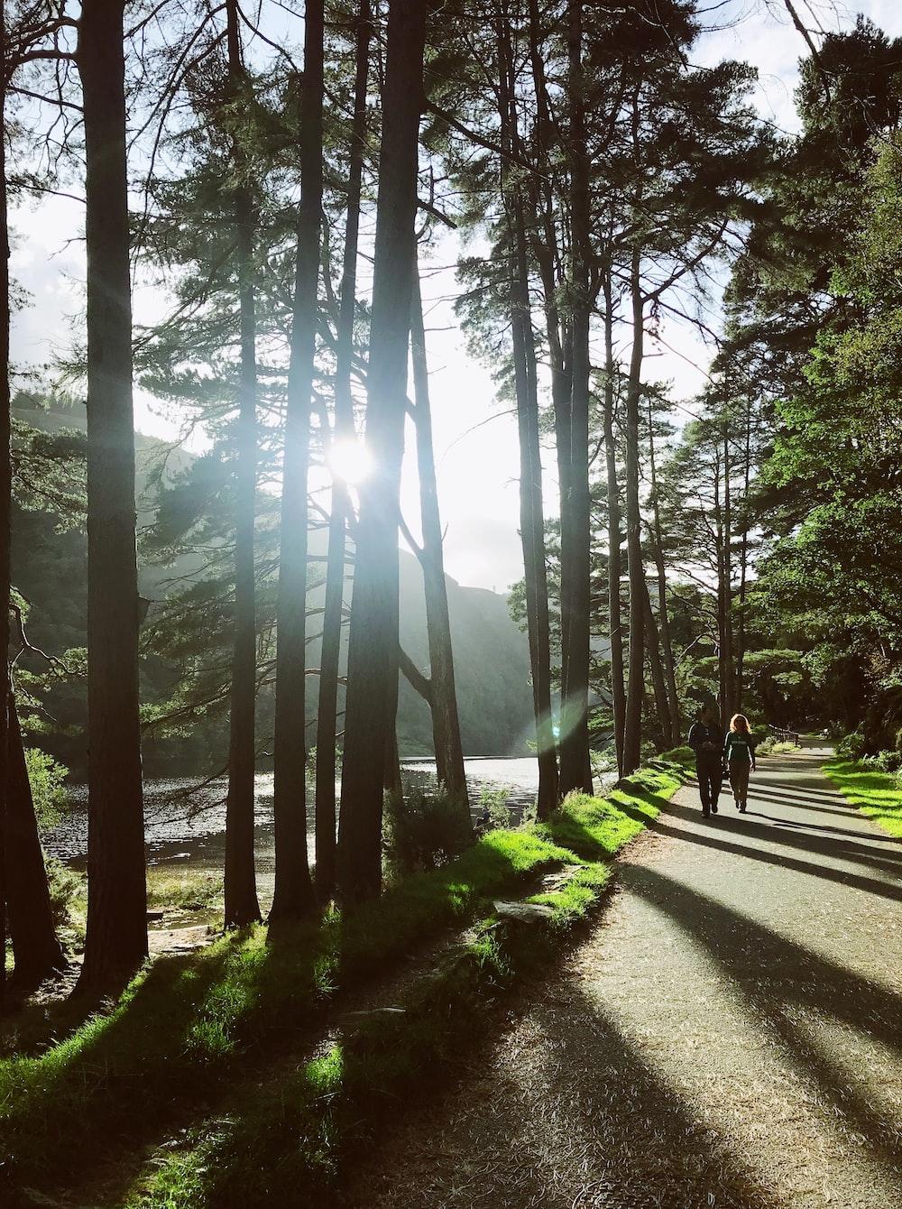 two people walking on pathway near trees