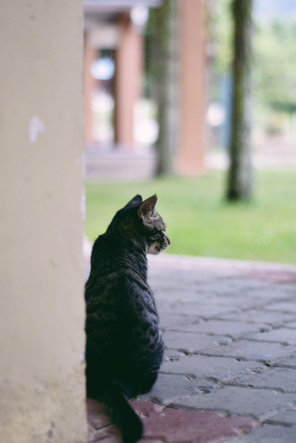 selective focus photography of black cat beside wall