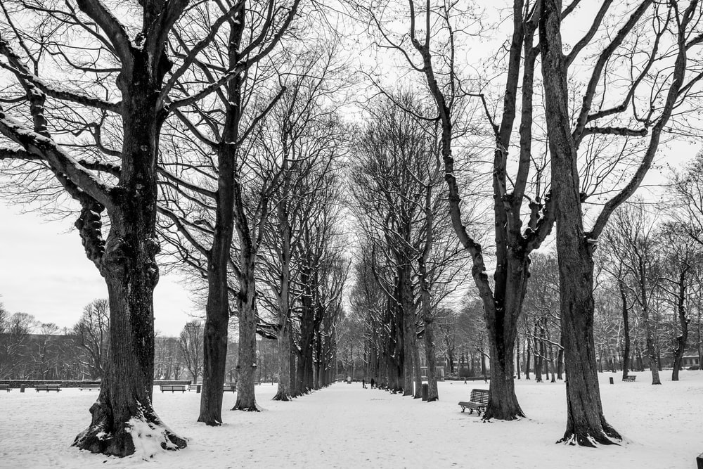 grayscale photo of snow-covered pathway with trees