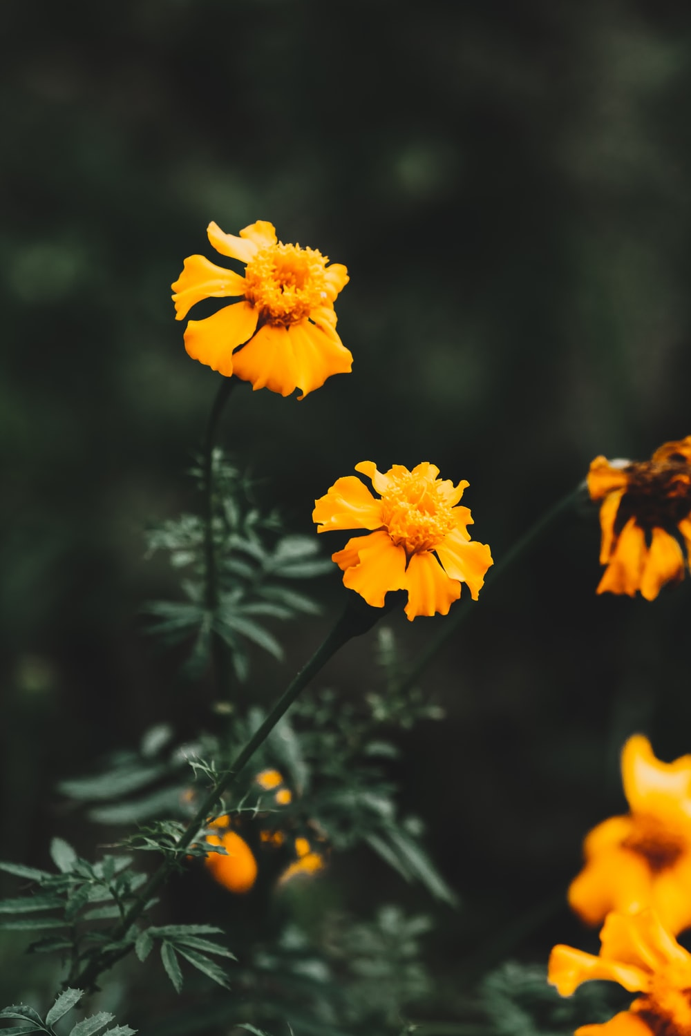macro photography of yellow-petaled flowers during daytime