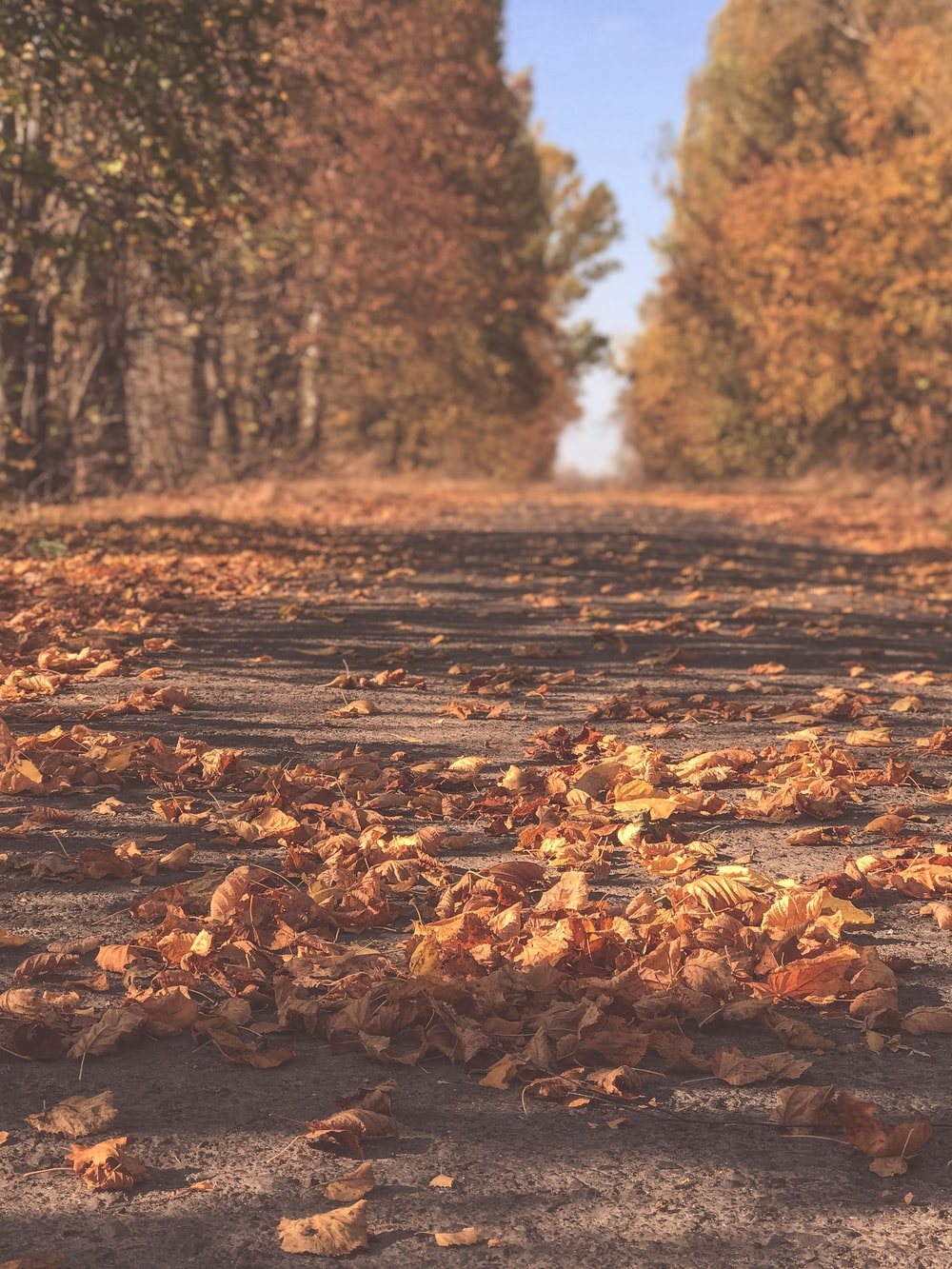 road between trees covered with withered leaves