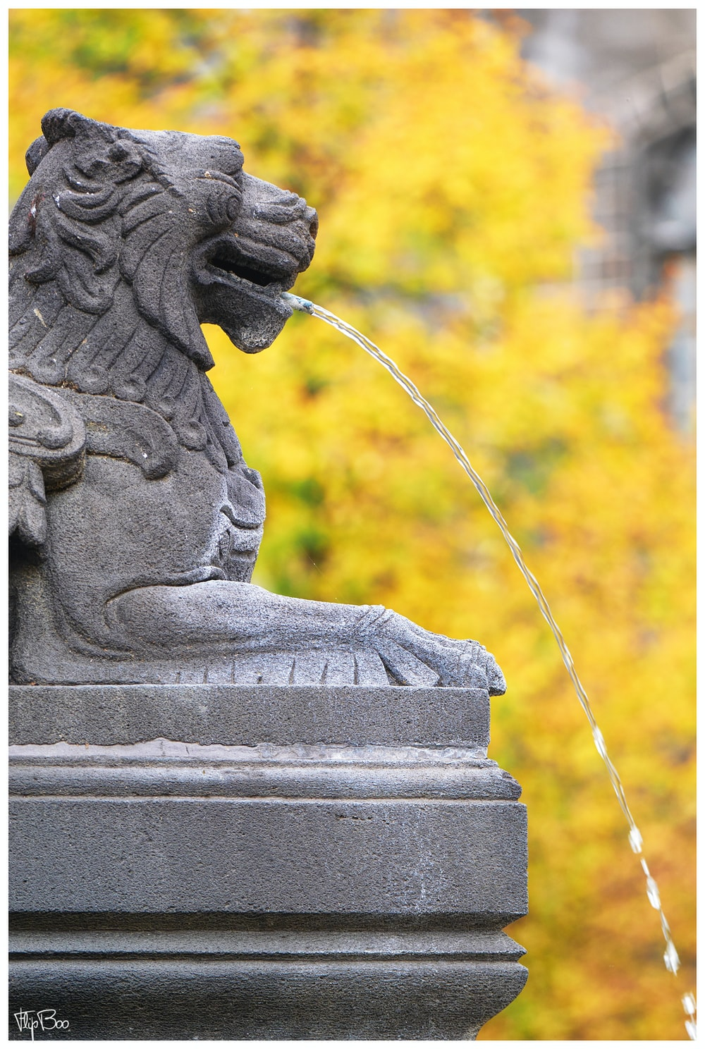 gray stone lion fountain
