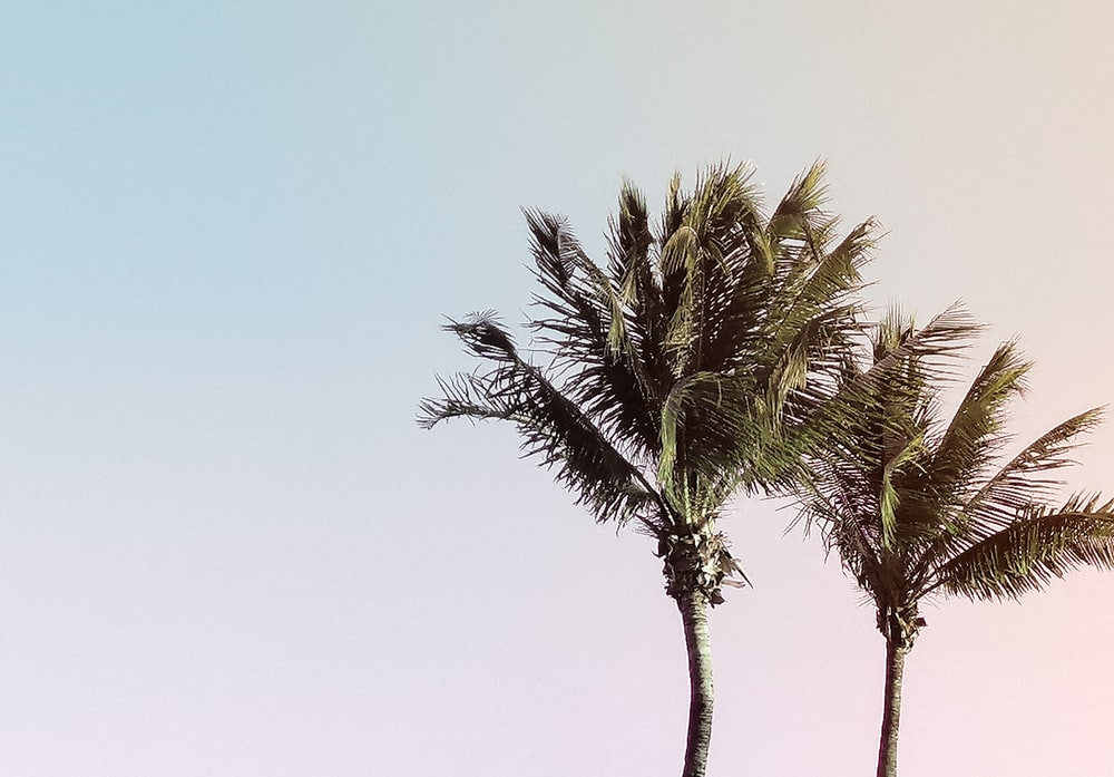 two green coconut trees under a calm blue sky