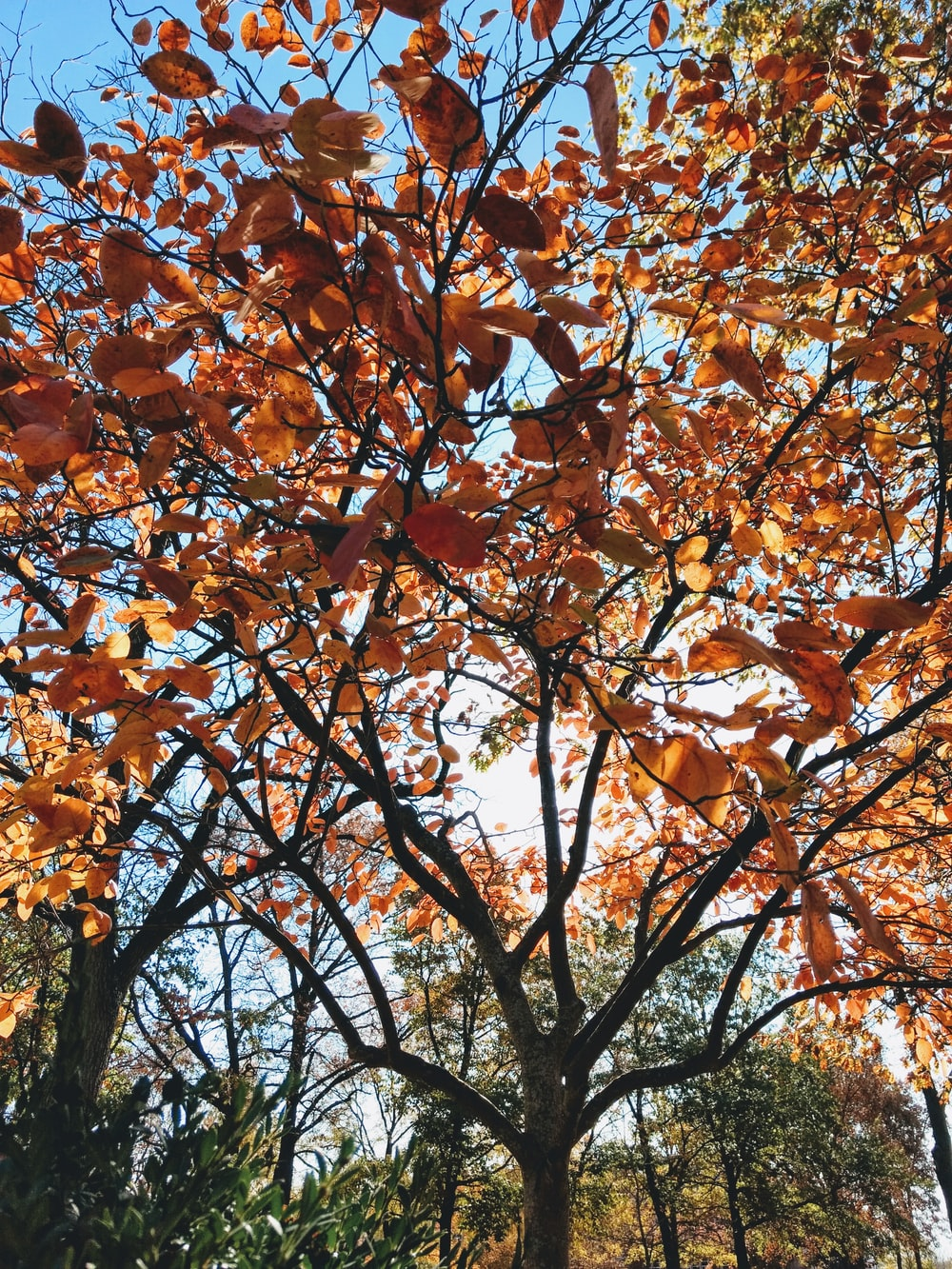 brown-leafed trees during daytime