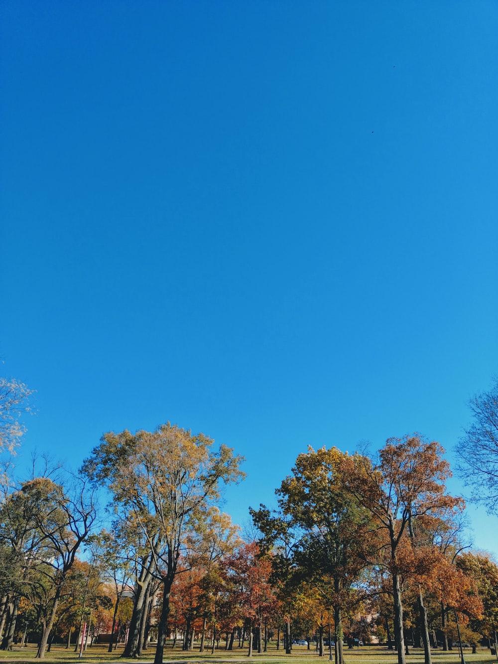 green and orange leafy trees