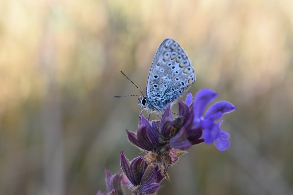 white and black butterfly perching on purple petal flower