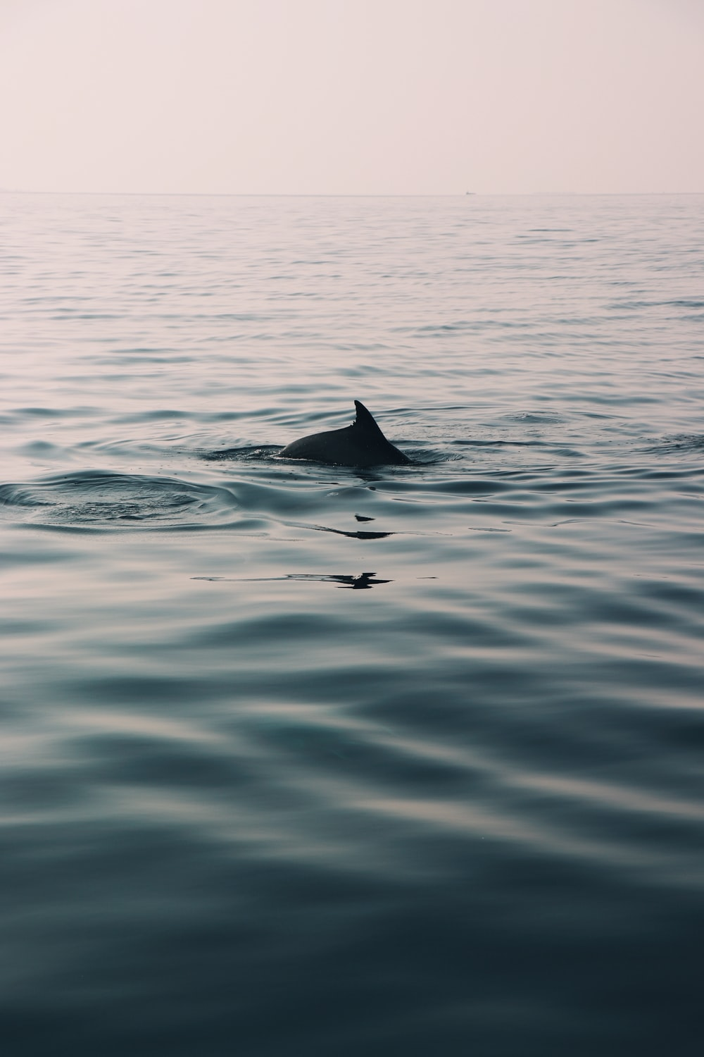 dolphin on calm water during daytime