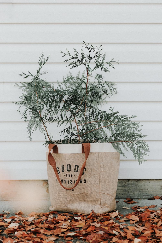 green-leafed plant on gift bag