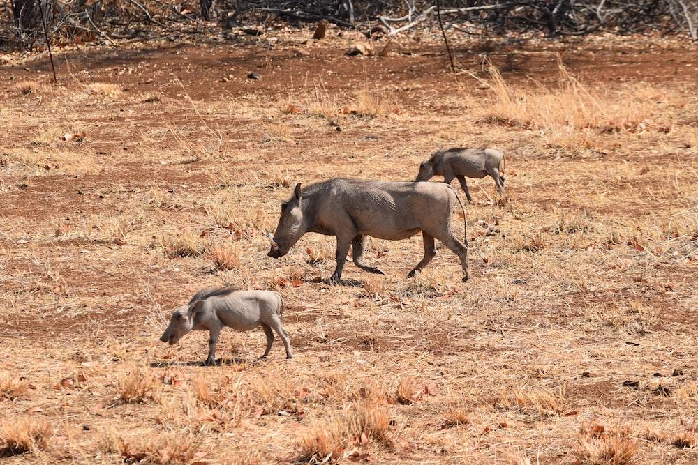 three gray animals