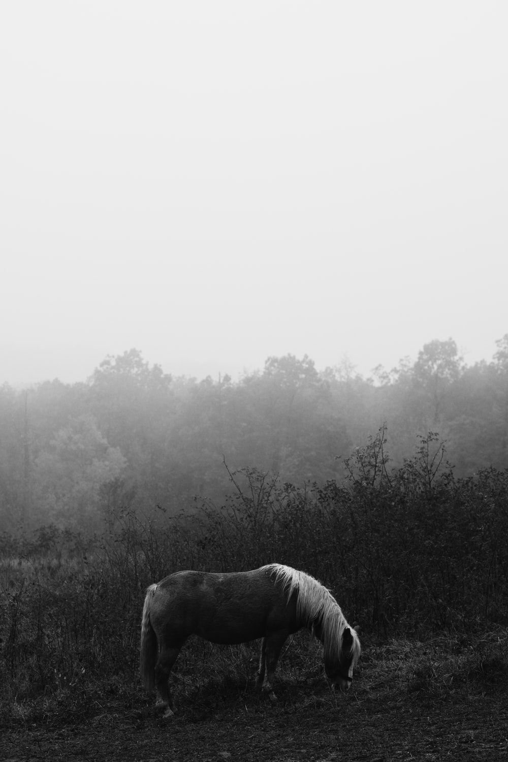 grayscale photography of horse near trees