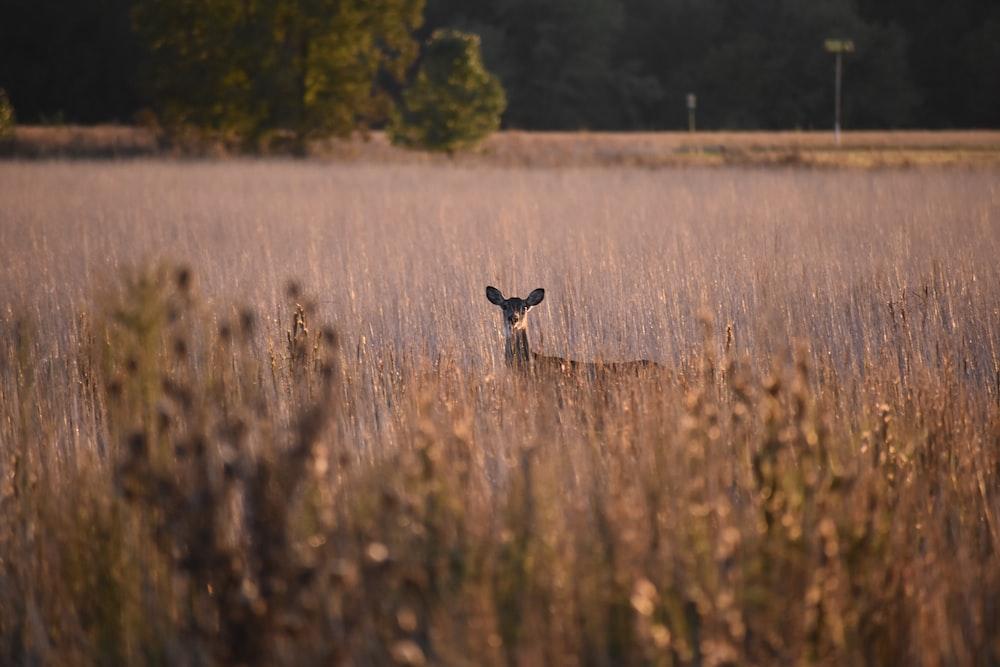 brown deer on brown plant field