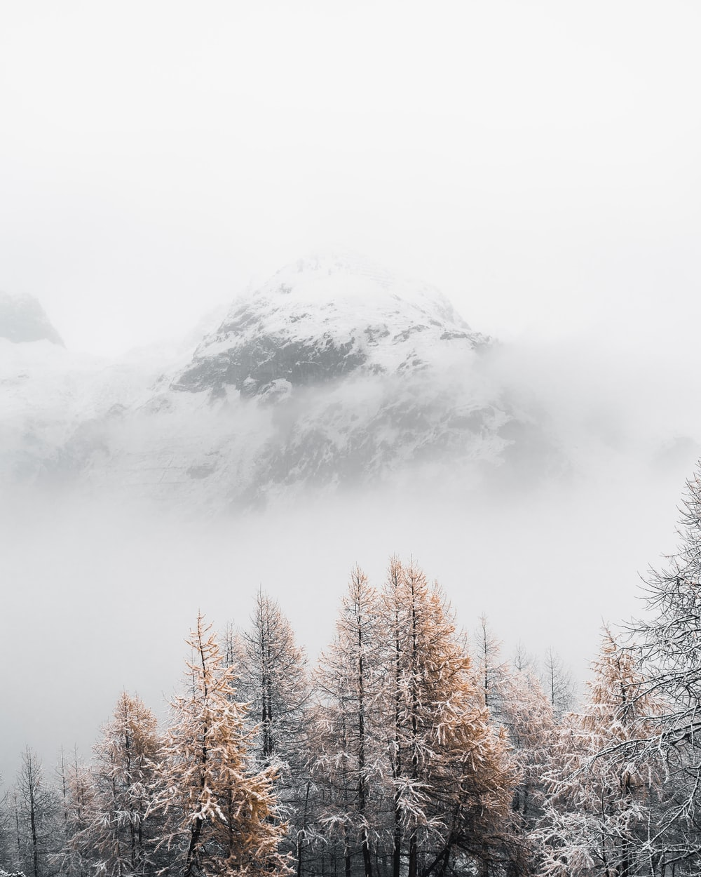 gray trees surrounded by fogs