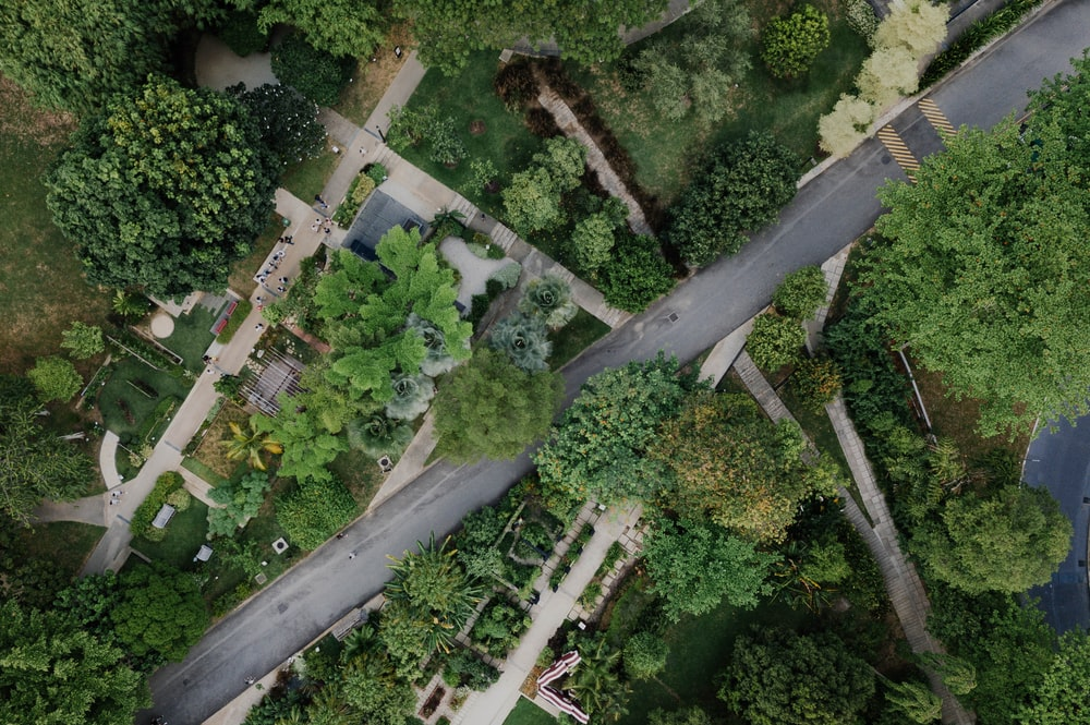 aerial photography of roadway surrounded by trees