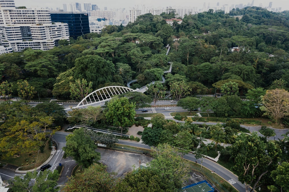 green leafy trees and white bridge