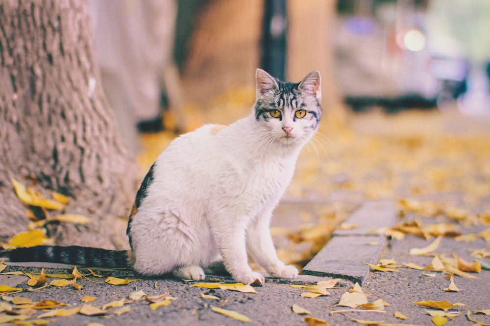 white and black tabby cat sitting beside tree on sidewalk