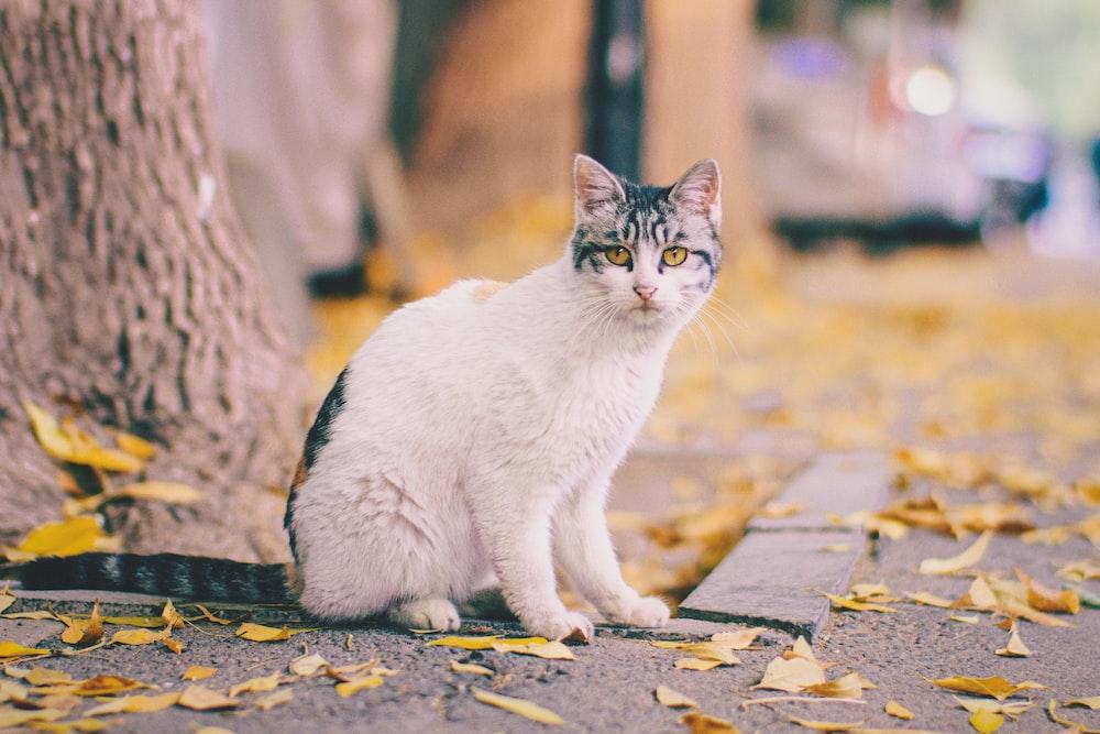 white and black tabby cat sitting beside tree on sidewalk