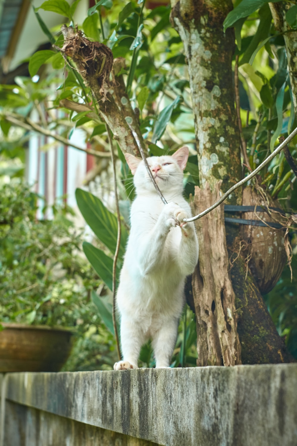 white cat playing with wire