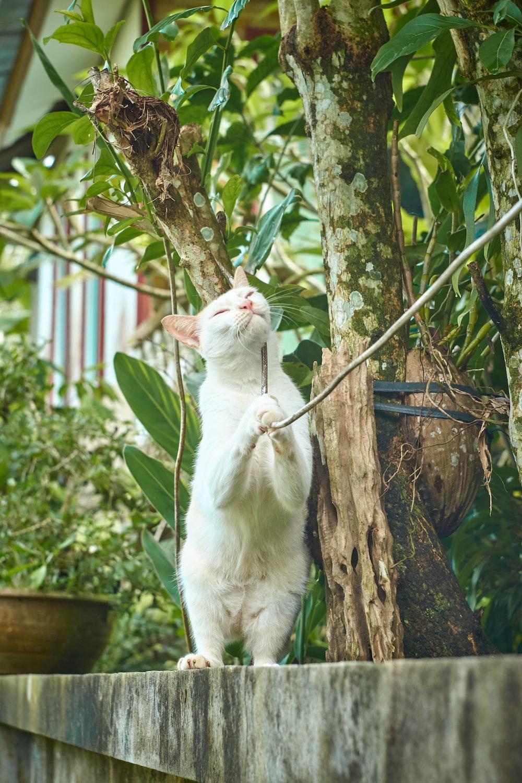 white cat beside tree