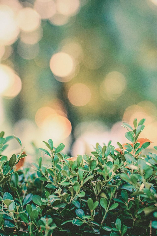 green leafy bush