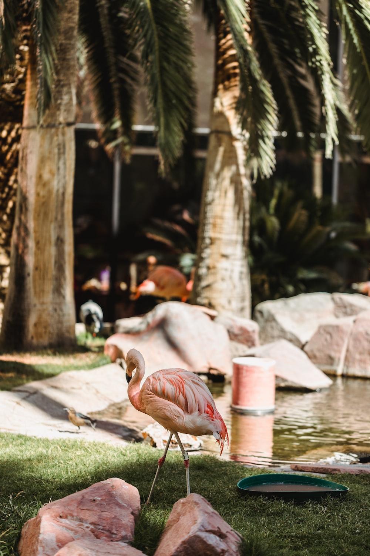 pink flamingo near body of water