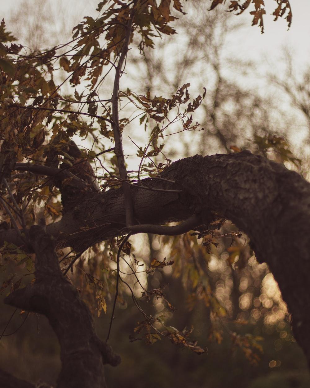 green-leafed tree duringdaytime