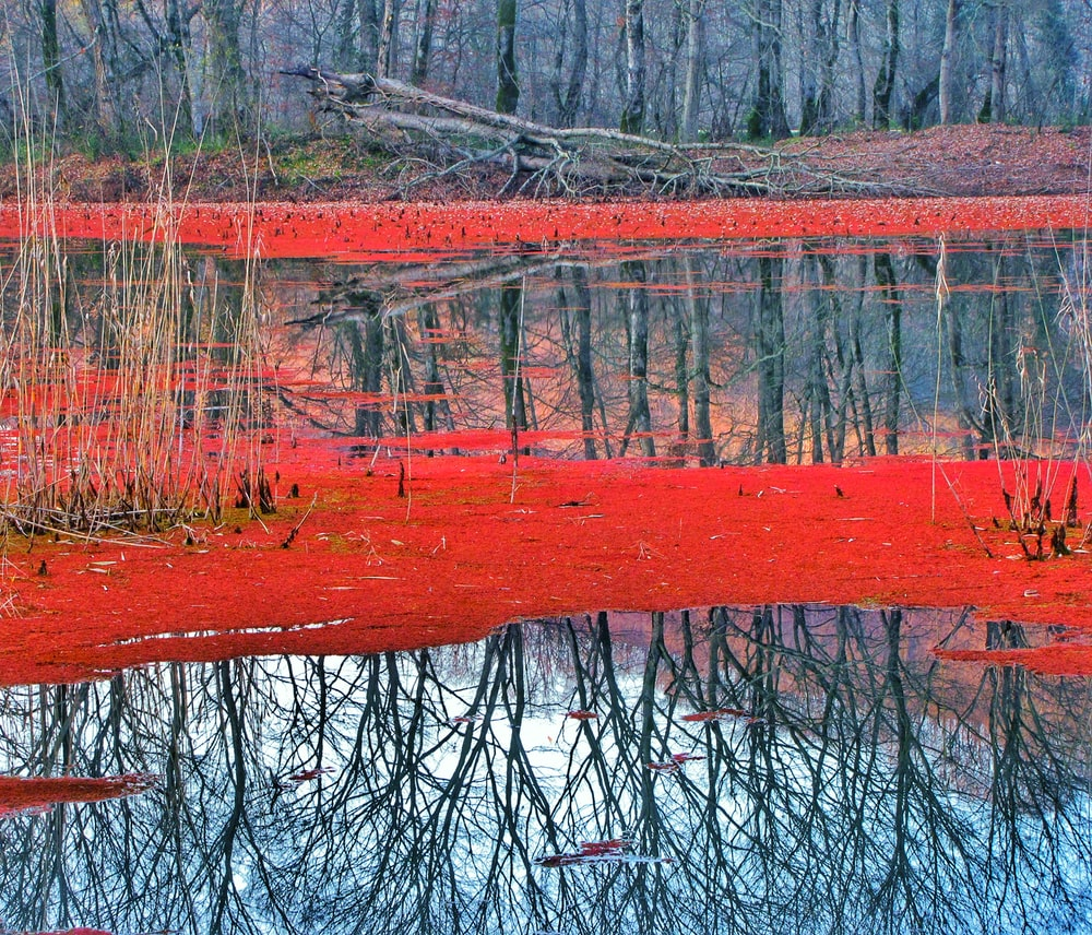 body of water surrounded by withered trees