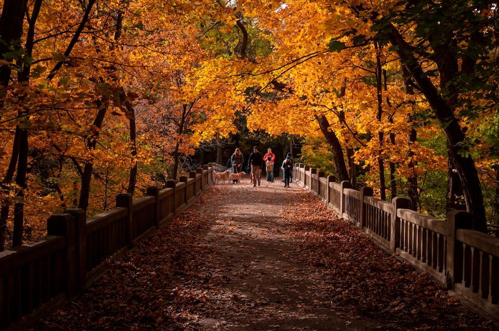 people waking on bridge between trees