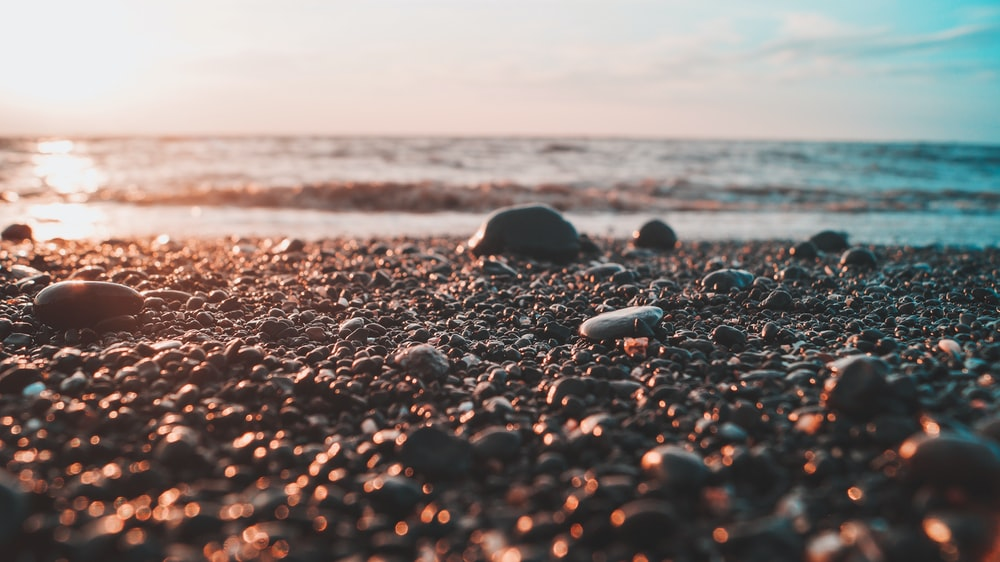 selective focus photography of seashore during daytime