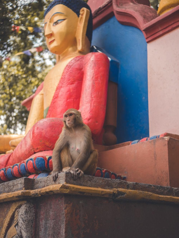 gray monkey sitting beside Buddha statue