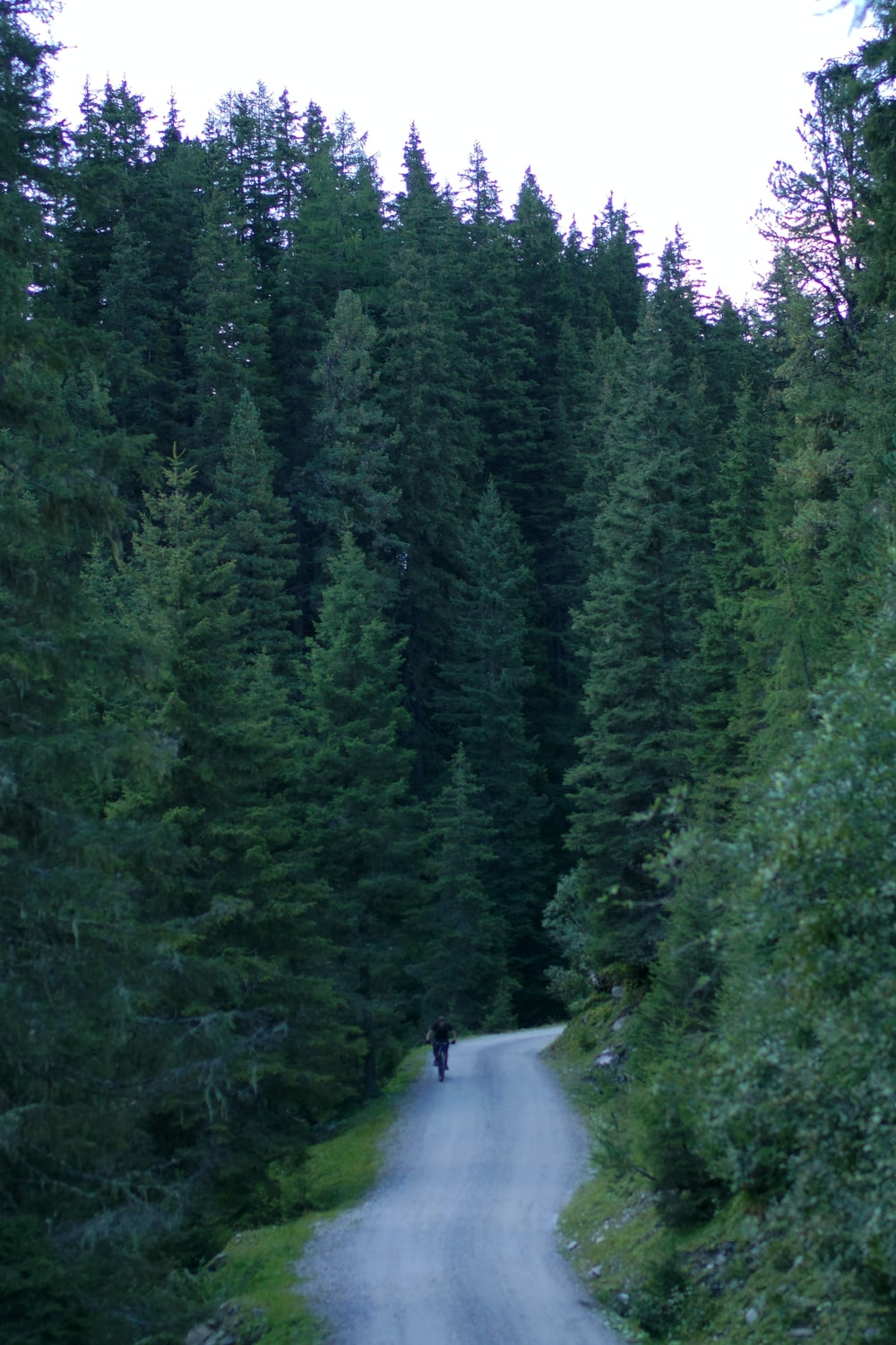 person walking on road between green trees